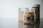 "8 Ounce (SM) Mason Jar Candle with ""OLDE Tyme""  LID"
